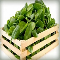 Everbearing Spinach