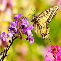 Butterfly Garden Mat