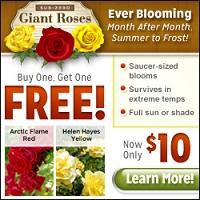 Sub-Zero Giant Roses